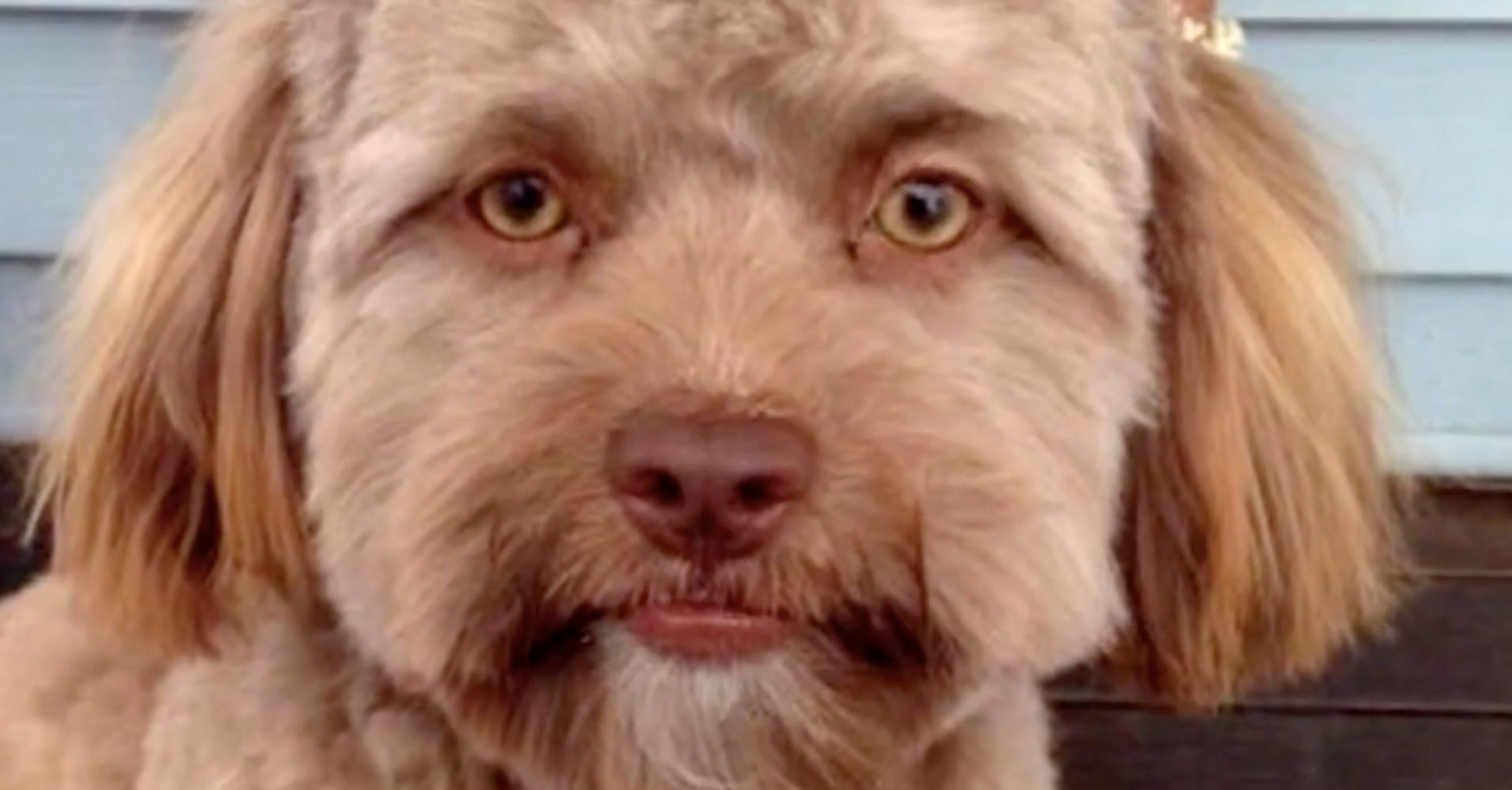 This Puppy With A Strangely Human Face Is Freaking Out The ...