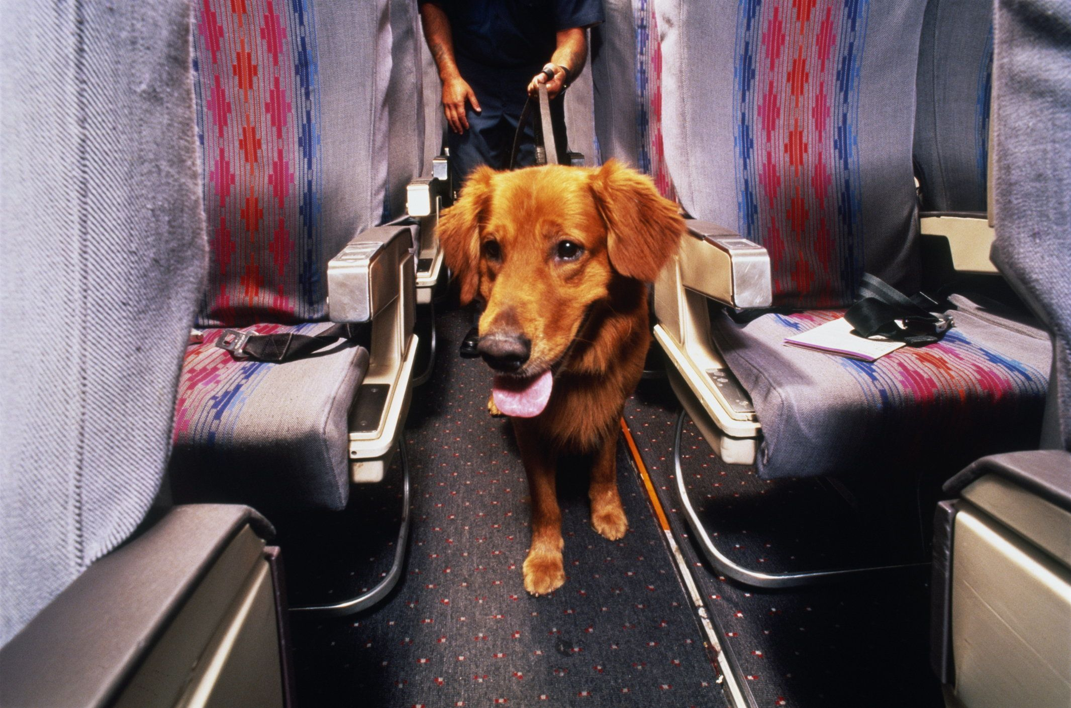 U.S. Customs officer and canine partner conducting inspection of commercial passenger aircraft for drug smuggling.