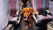 24 Pets Died Flying With U.S. Carriers Last Year. 18 Were On United.