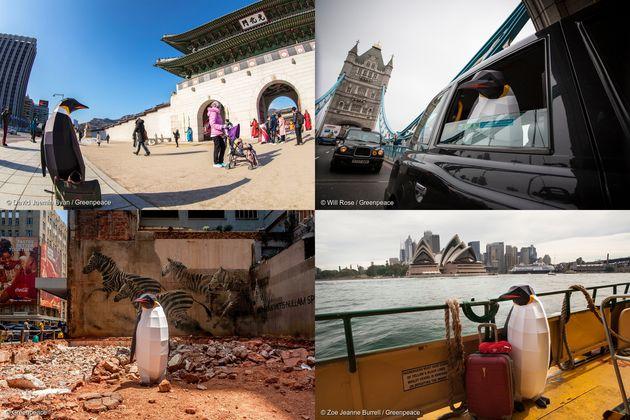 지난 1월 펭귄들의 행진 당시 세계 곳곳에서 나타난 펭귄들. 왼쪽 위에서 시계 방향으로 한국 서울, 영국 런던, 호주 시드니, 남아프리카 공화국