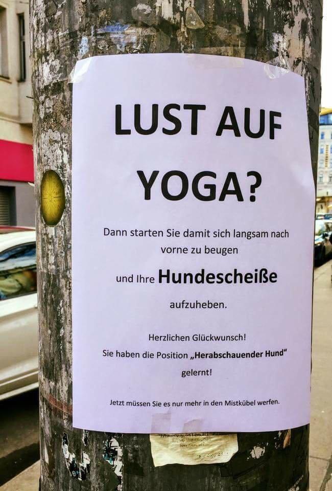 Dieser Aushang in Köln ist keine Yoga-Einladung, sondern eine Abrechnung mit Hunde-Besitzern