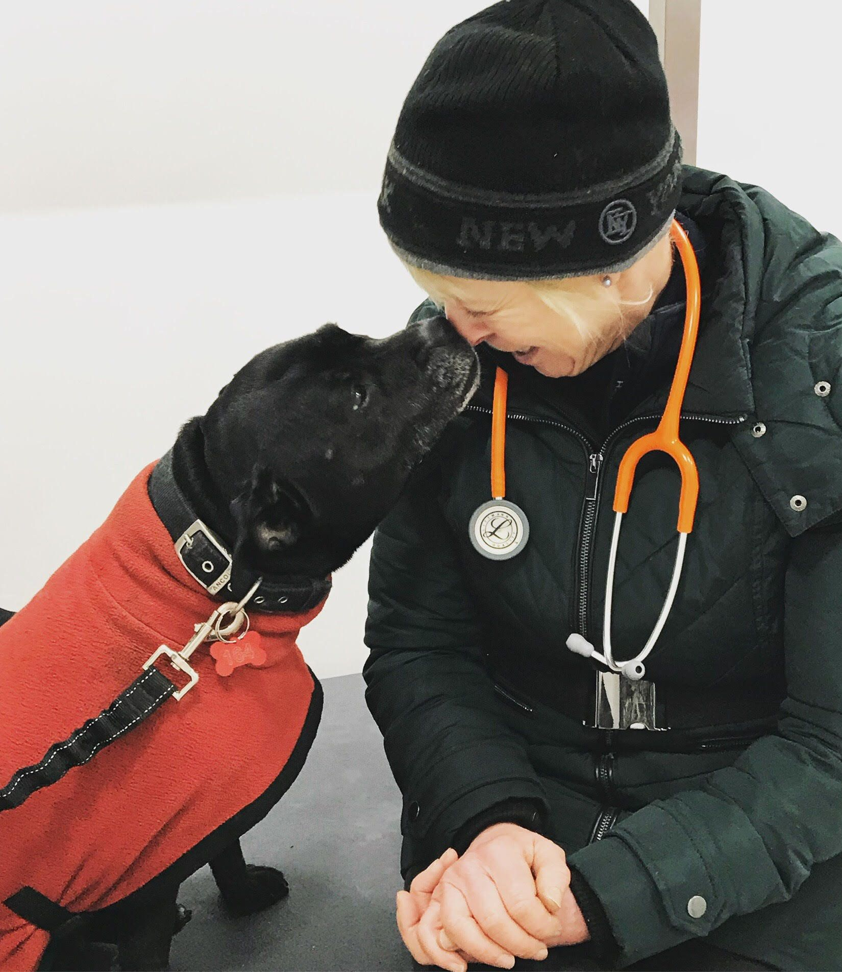 Volunteer Vets Are Making Sure Homeless Dogs Get The Care They
