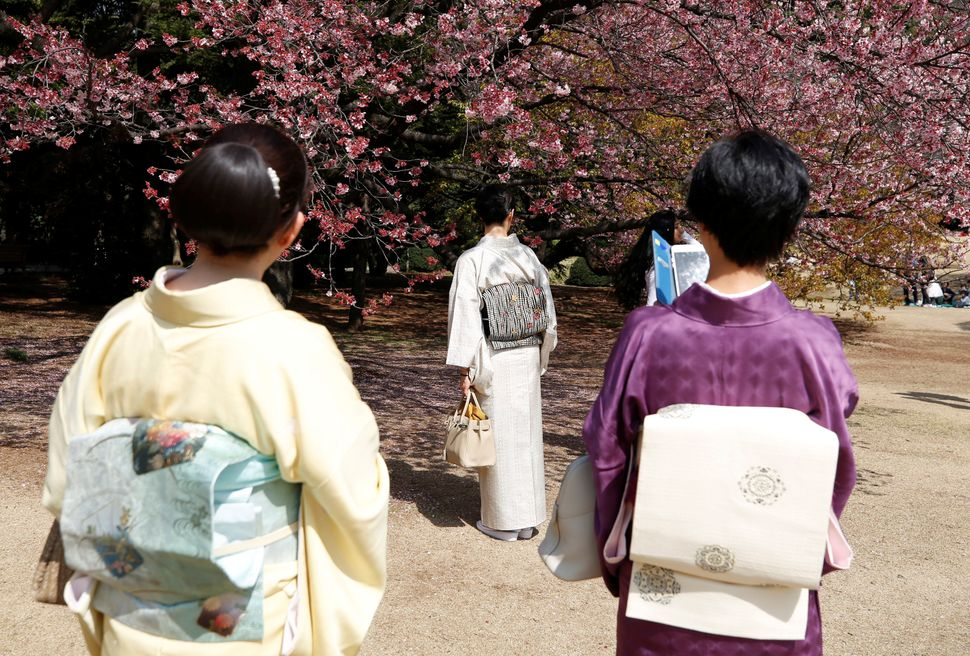 Kimono-clad women look at early flowering Kanzakura cherry blossoms in full bloom at the Shinjuku Gyoen National Garden.