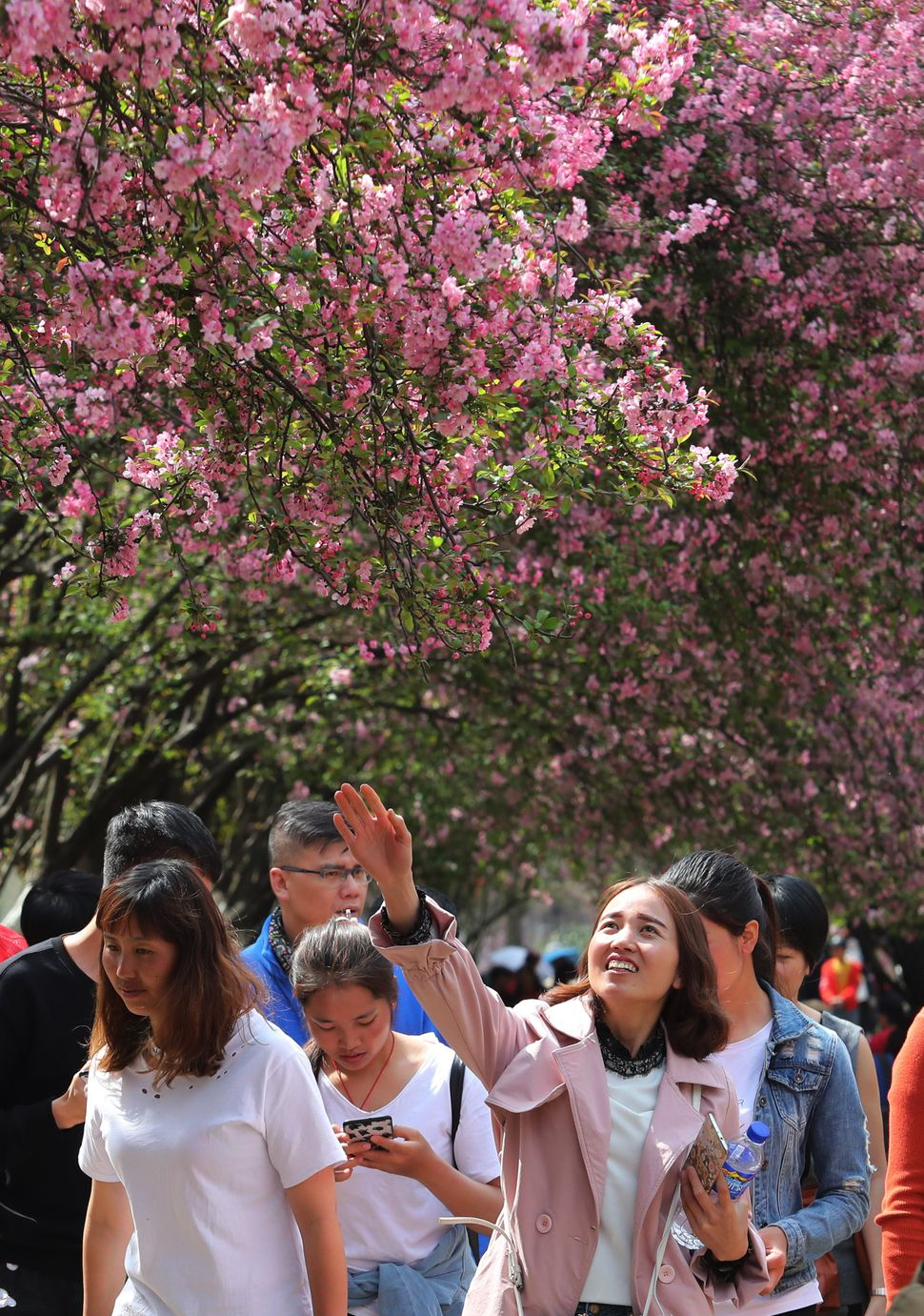 Citizens enjoy cherry blossoms during 19th Cherry Blossom Festival at Kunming Zoo.