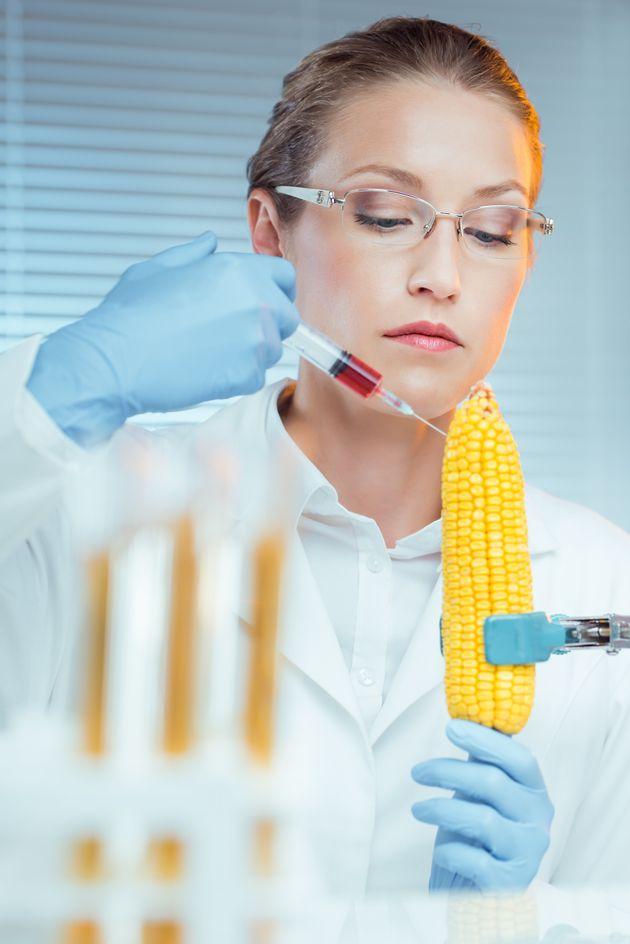 과학자가 옥수수에 뭔가를 주입하고