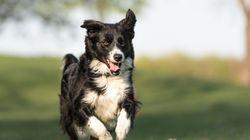 15-Jährige lässt Hund laufen – und ist entsetzt, mit was der zurückkommt