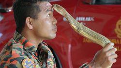 '뱀 조련사'로 유명했던 말레이시아 소방관이 뱀에 물려