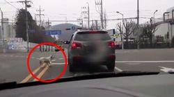 개 목줄 잡고 운전한 시민이 경찰 조사에서 한 진술