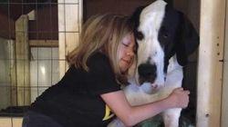 Bella konnte nicht alleine gehen, dann trat Hund George in ihr Leben