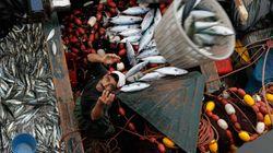 Sahara: La commission européenne nuance l'avis de la CJUE sur l'accord de pêche avec le