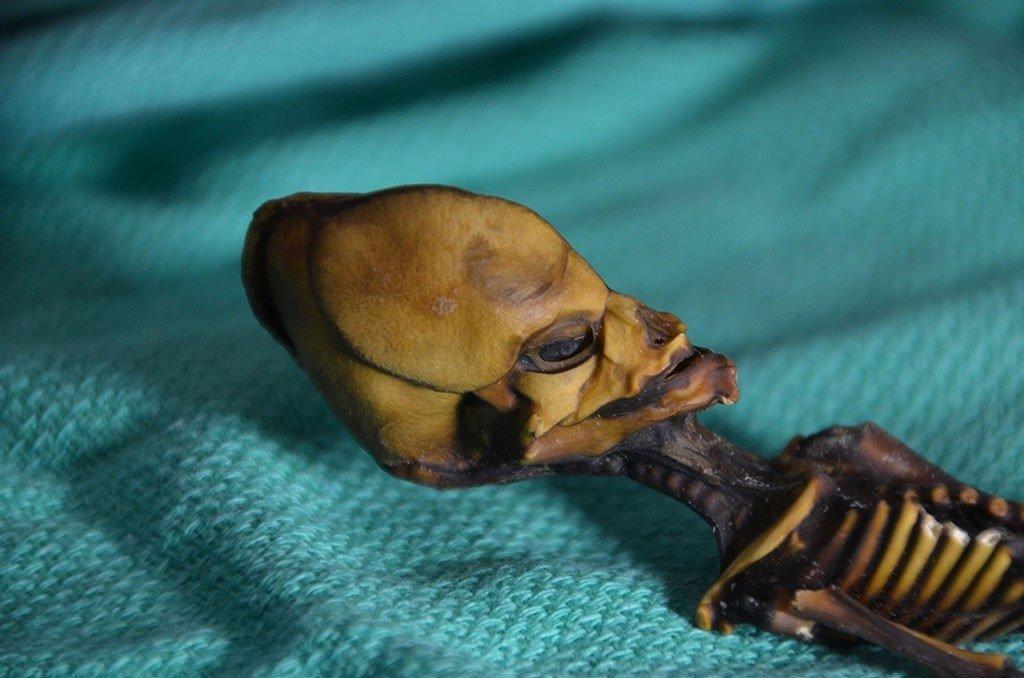 Strange 'Alien Skeleton' Mystery Finally