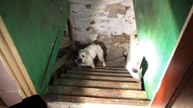 새로 이사간 집 지하실에 개가 묶여