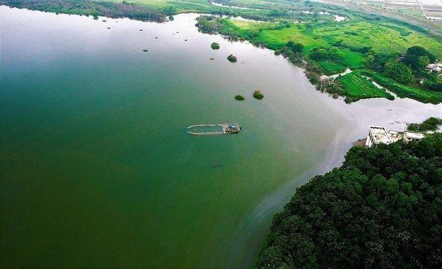 2013년 여름 낙동강 창녕함안보 상류에서 녹조제거선이 녹조를 흩뜨리기 위해 초록색으로 물든 강물을 휘저으며 다니고