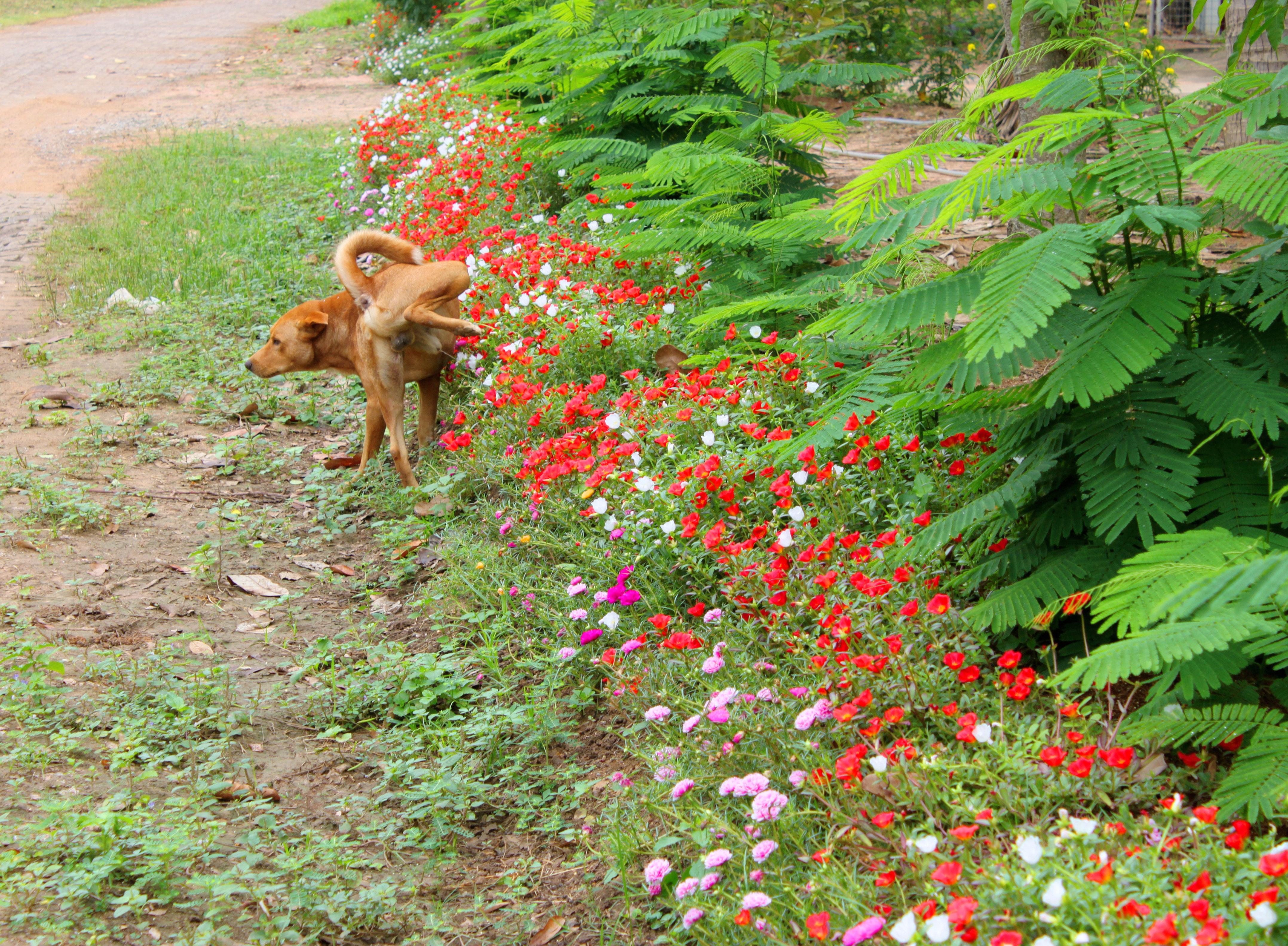 Ulm: Männer streiten wegen pinkelndem Hund – am Ende fallen Schüsse