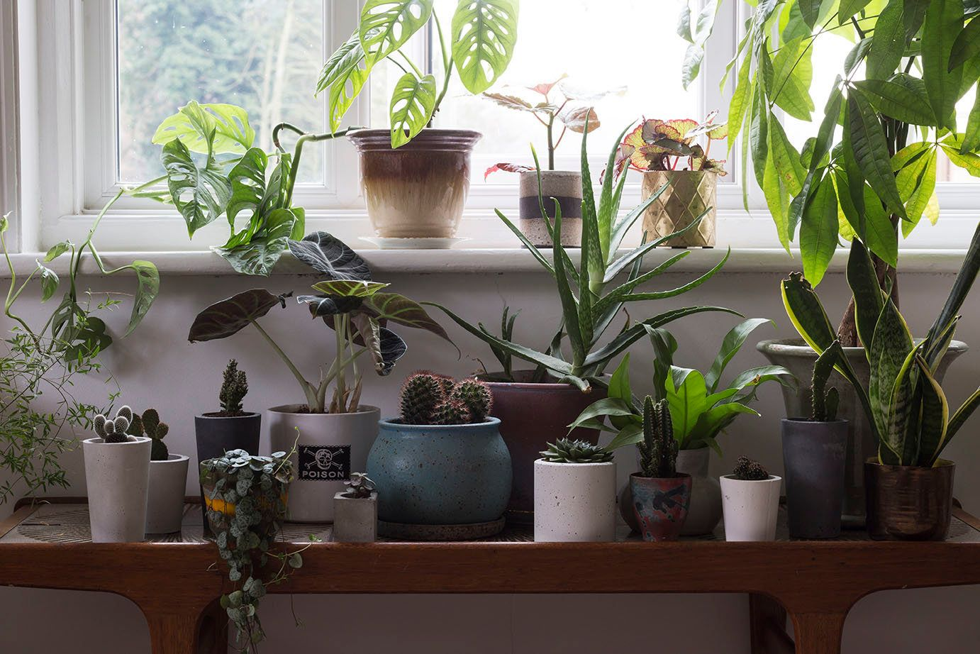How To Turn Your Rented House Into An Urban Jungle