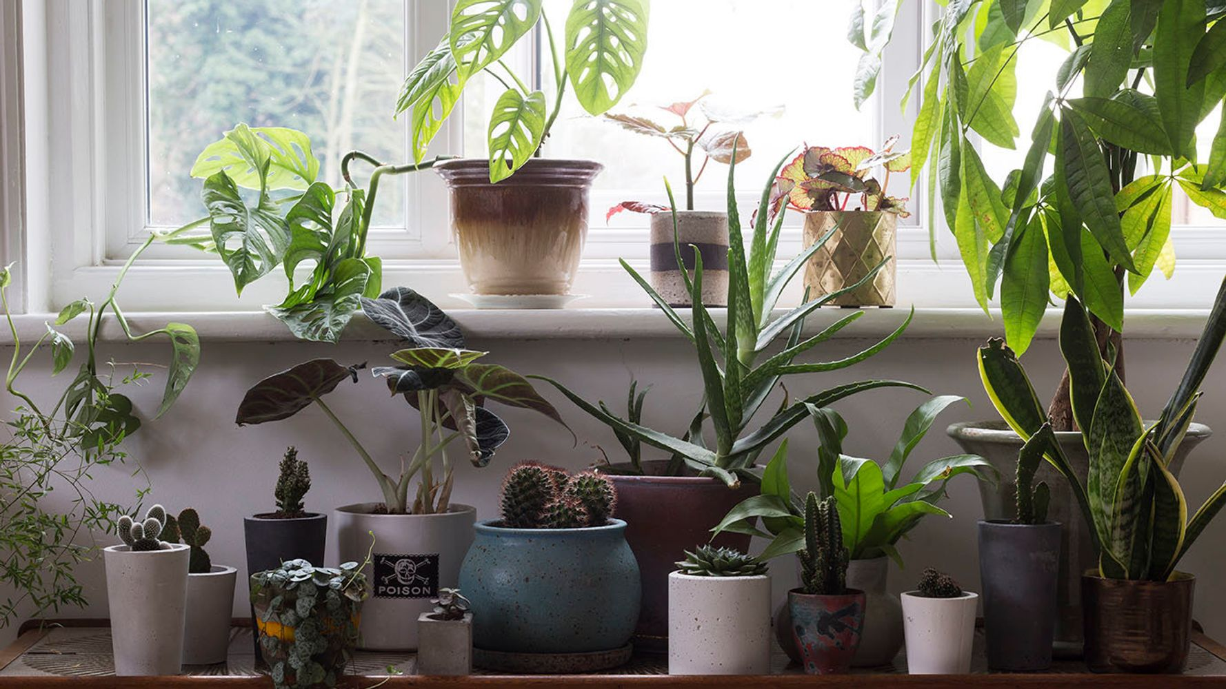 How To Turn Your Rented House Into An Urban Jungle ... Rainforest House Terrarium Plants on rainforest philodendron, rainforest animals plants, rainforest ferns, dart frogs plants, rock garden plants, rainforest carnivorous plants, rainforest water plants, rainforest banana trees, rainforest habitat plants, rainforest plants names, rainforest food plants, rainforest flowers, rainforest bedding, rainforest tree plants, rotten rainforest plants, rainforest ecosystem plants, rainforest swamp plants, rainforest elephant ears, rainforest tropical plants, rainforest green plants,