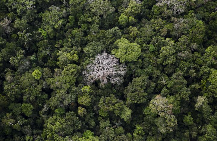 An aerial view of the Amazon Rainforest at the Bom Futuro National Forest in Port Velho, Brazil.