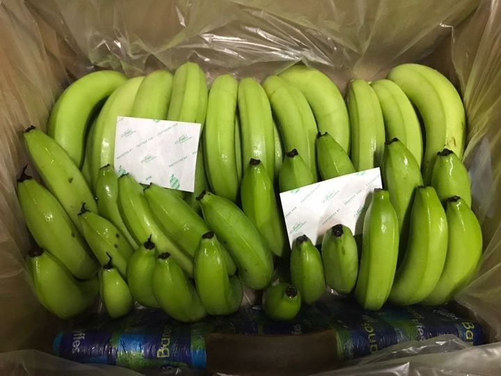 Bananas packaged with two small transit filters.