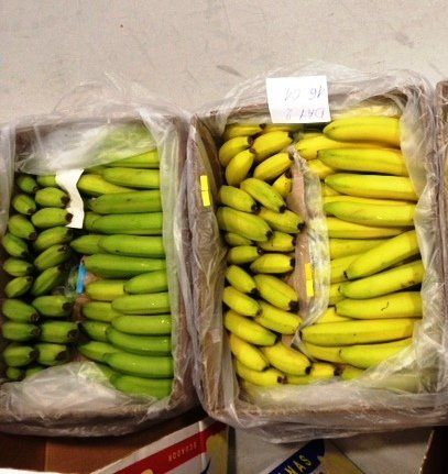Bananas transported with the filters (left) compared to those transported without (right).