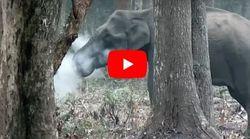 O (άγριος) ελέφαντας που καπνίζει: Το μυστήριο που έχει αφήσει άφωνους τους