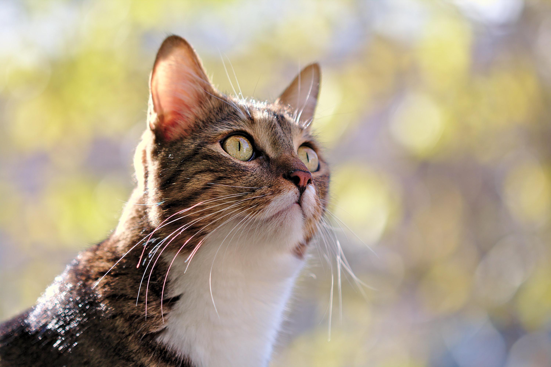 Βασανισμός γάτας με ψαροντούφεκο στην