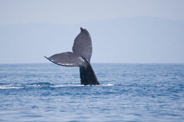 National Geographic: Γιατί οι φάλαινες είναι