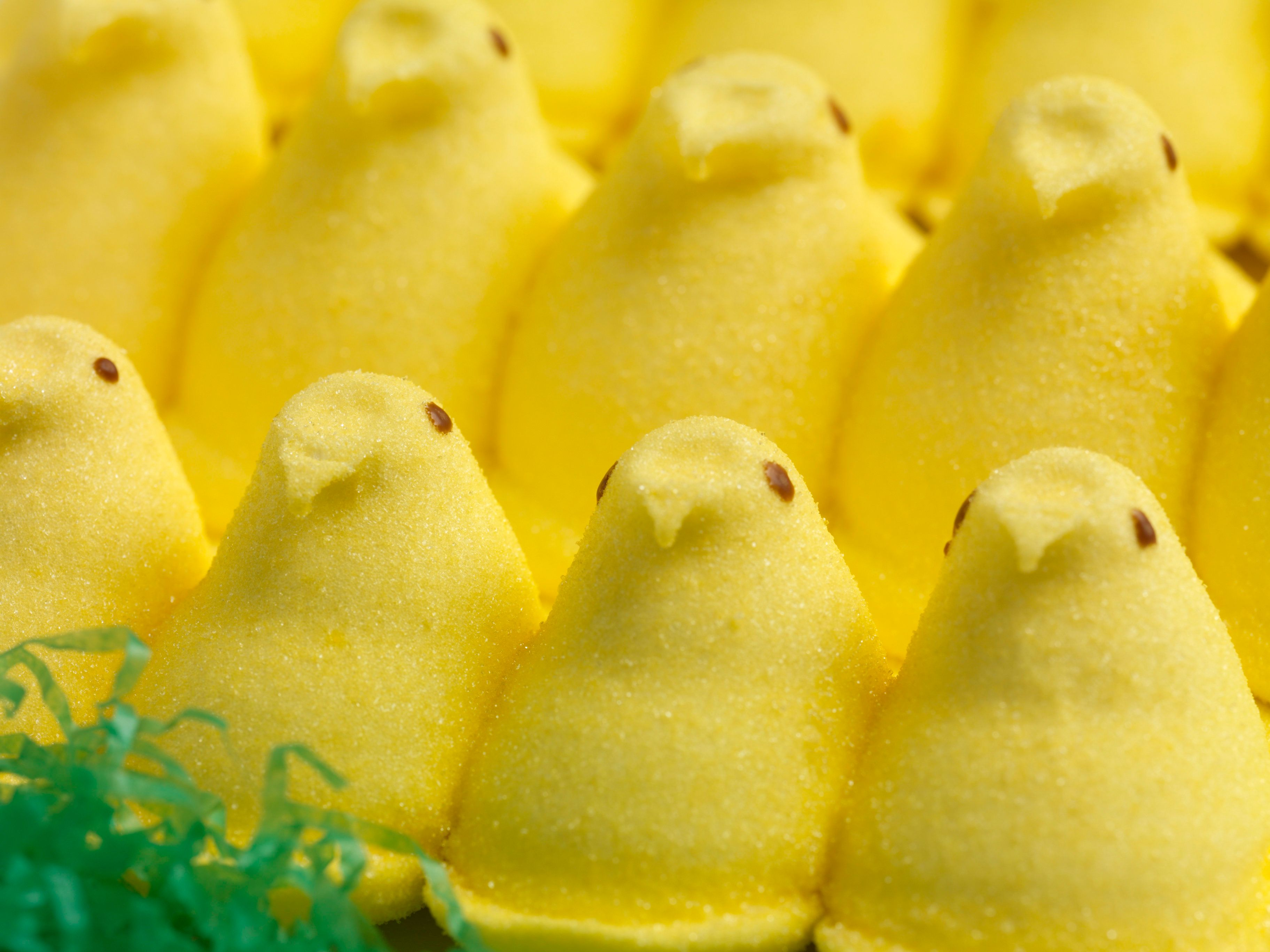Yellow Marshmallow Chicks in Rows
