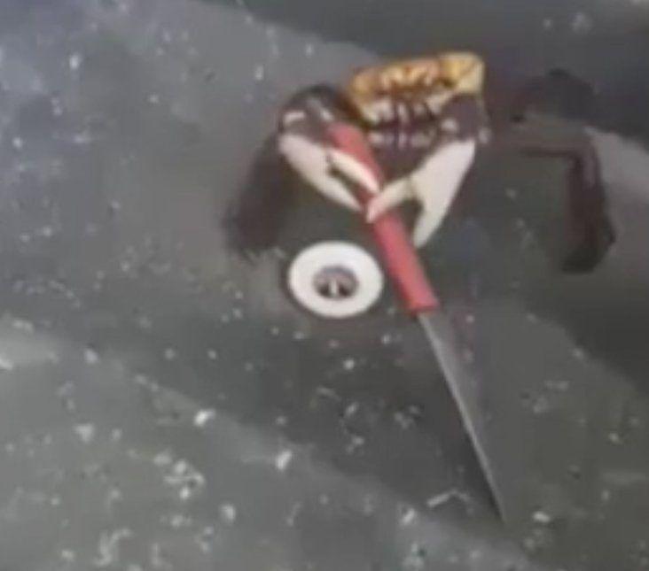 Η αληθινή ιστορία πίσω από το βίντεο με το καβούρι που αμύνεται με
