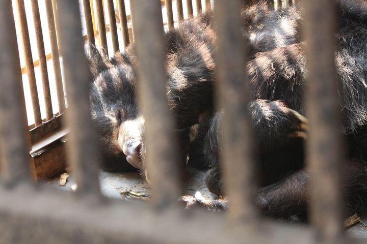 Rangila at The Central Zoo.