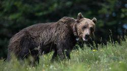 Πρώτη γενετική μελέτη της καφέ αρκούδας στην Ελλάδα: Γεγονός-σταθμός για την εγχώρια έρευνα της