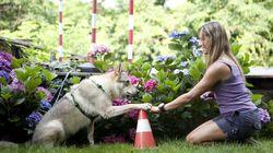 Η απάντηση στην κακοποίηση ζώων από το Ελληνικό Ινστιτούτο Συμπεριφοράς και Εκπαίδευσης Σκύλου και