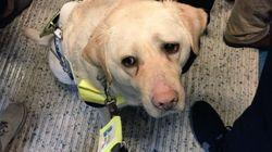 Blinder Mann betritt Bahn mit seinem Hund – was dann passiert, ist beschämend