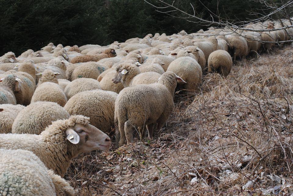 Jeden Tag zieht Sven de Vries mit seiner Herde