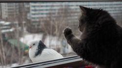 Γερμανός ανατινάζει πουλιά για να εκδικηθεί για το θάνατο των γατιών