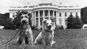 The Kennedy family dogs Charlie and Pushinka, at the White House. (Photo by © CORBIS/Corbis via Getty Images)
