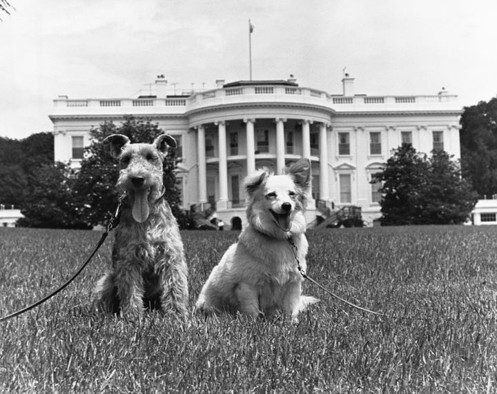 Kennedy family dogs Charlie (a Welsh terrier) and Pushinka (a mixed-breed dog given as a gift from Soviet leader Ni