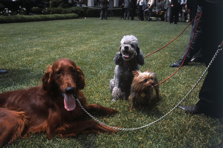 King Timahoe, Pasha and Vicky on the White House lawn in 1969.