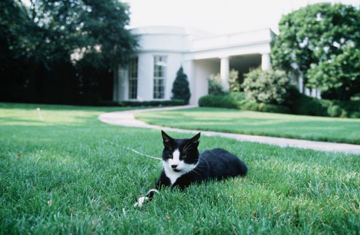 Socks at the White House in 1994