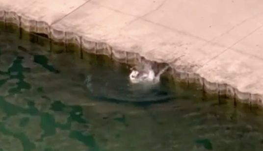 Hund droht in See zu ertrinken – dann kommt ein Polizist vorbei