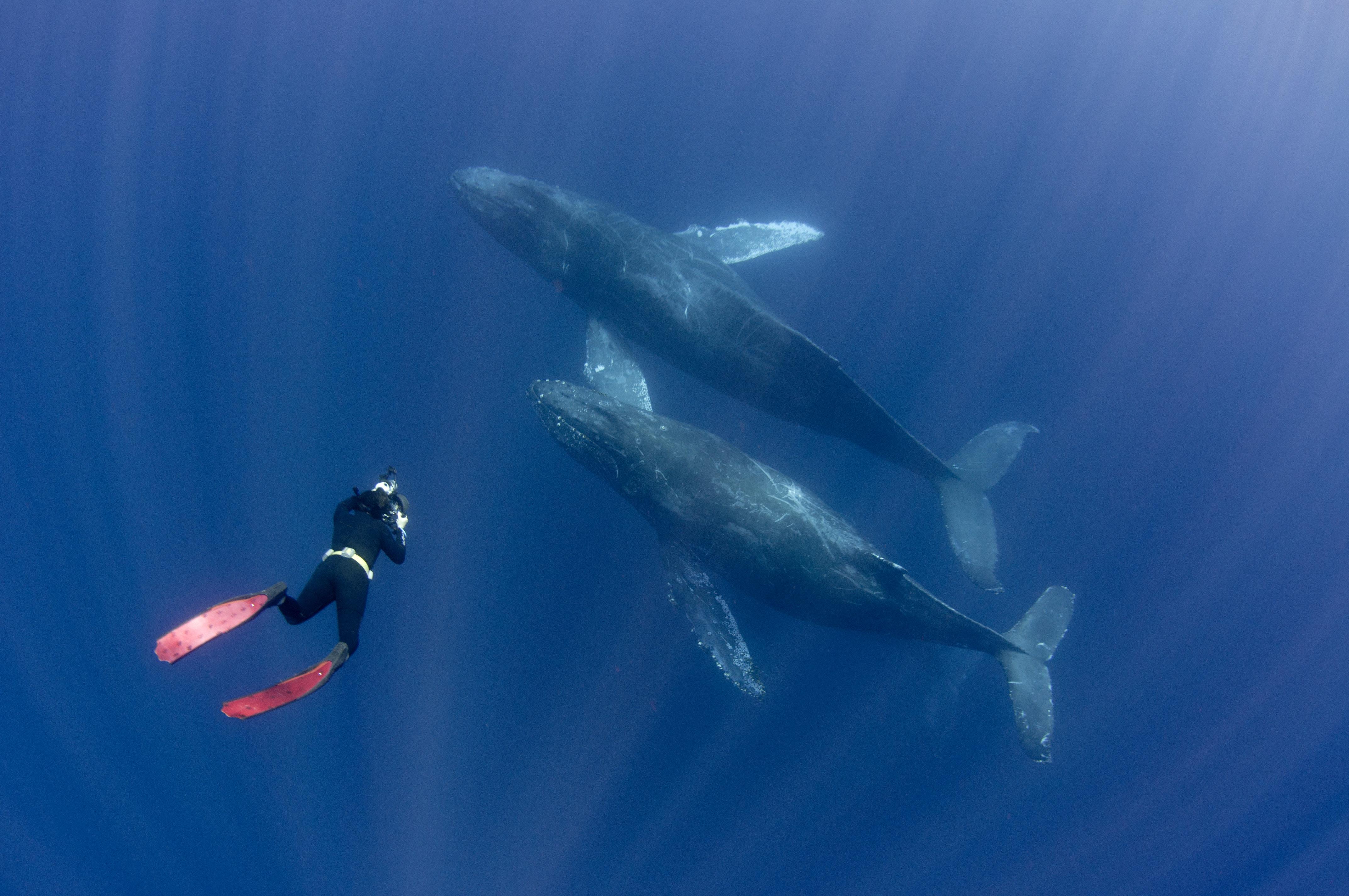 지구상 가장 거대한 동물의 먹이가 사라지고