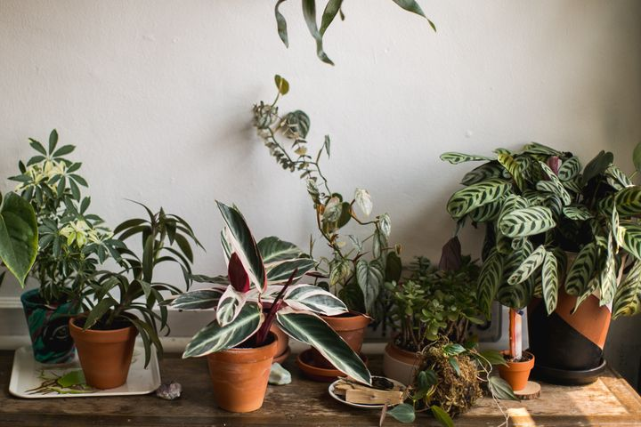 7 Underrated Places To Houseplants Online