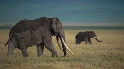 Britain To Impose One Of The World's Toughest Ivory
