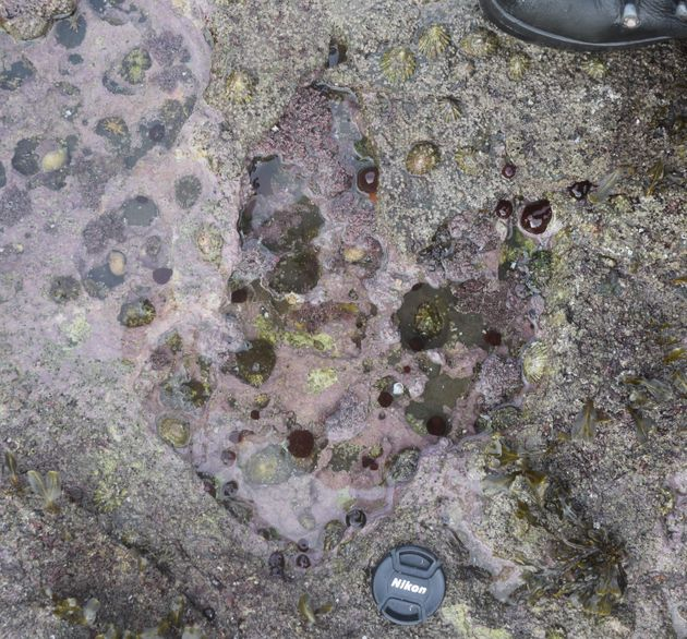 Scientists Make Exciting Dinosaur Footprint Discovery On The Isle Of