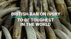 British Ban On Ivory To Be Toughest In The