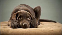Κατοικίδια και κροτοφοβία: Πως θα προστατέψετε τον σκύλο από τον φόβο των