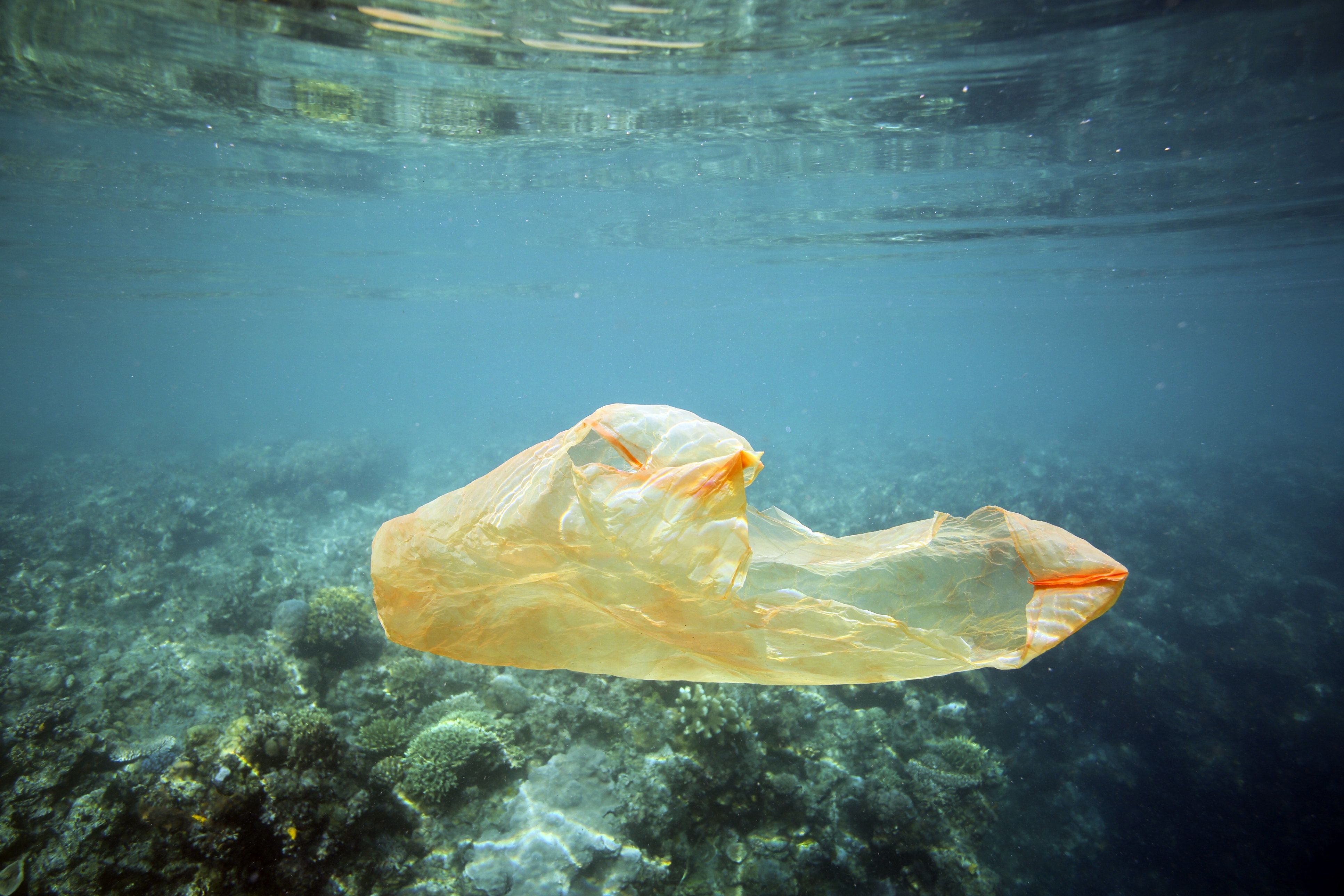 Plastic Bag Litter In Seas Around UK Has Dropped Since 5p Charge