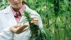 Ich bin Kinderärztin und verschreibe meinen Patienten Marihuana – das ist der Grund
