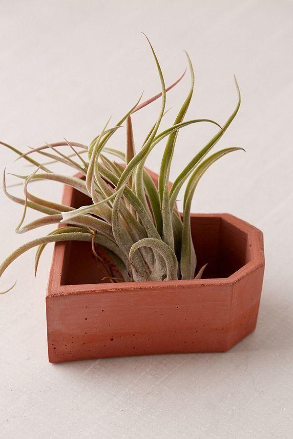 "Get it at <a href=""https://www.urbanoutfitters.com/shop/concrete-geometric-x-uo-heart-planter?category=home-decor-sale&co"