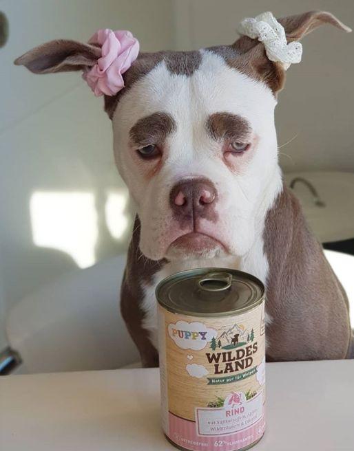 세상에서 가장 슬픈 강아지가 인스타그램 스타로
