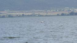 Νεκρός βρέθηκε ο 40χρονος ψαράς που αγνοούνταν στη λίμνη